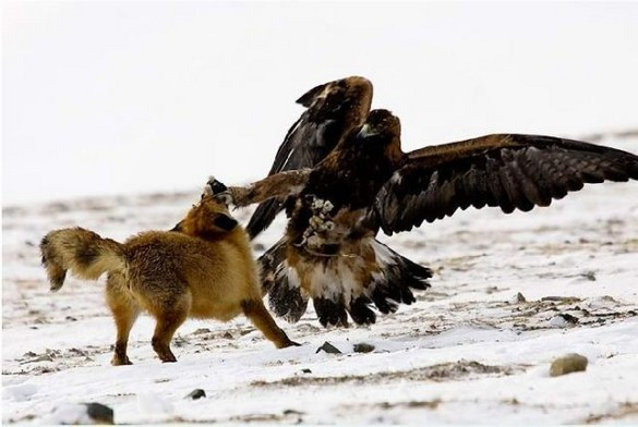 karate_bird-fox-eagle
