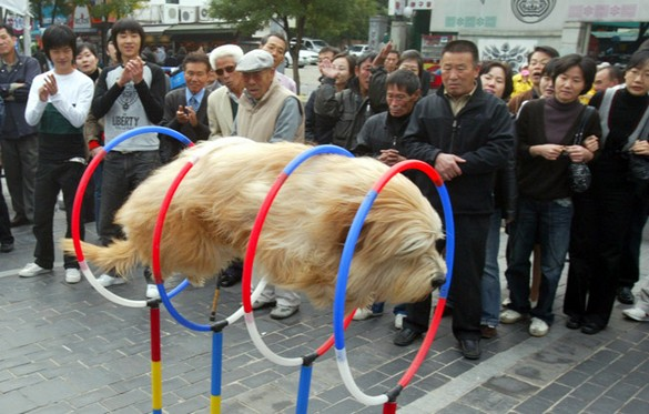 flying-dog-circles-japan-street-china