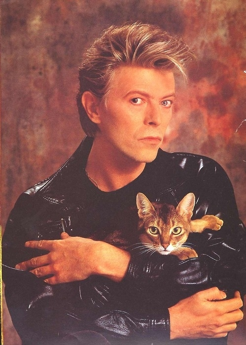 enhanced-buzz-david-bowie-cat-80s-look