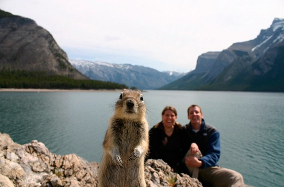 photobomb-videobombs-best-of5-squirrel-ground