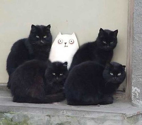 black-white-cats
