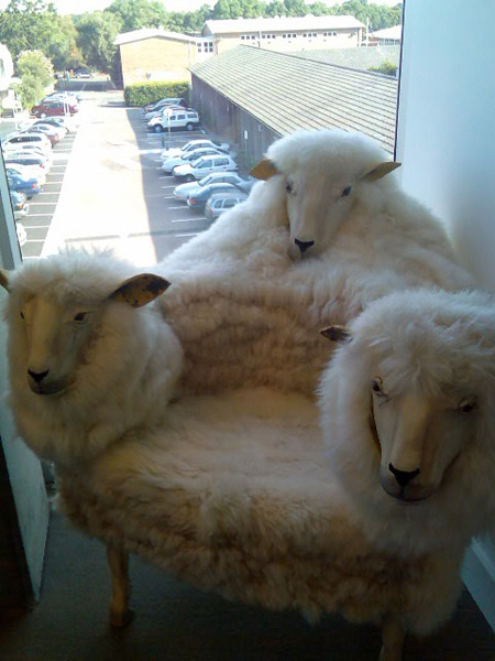 sheep-chair