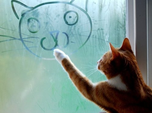 cat-drawing-window