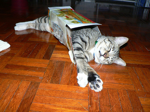 Cat in a box - chat en boite