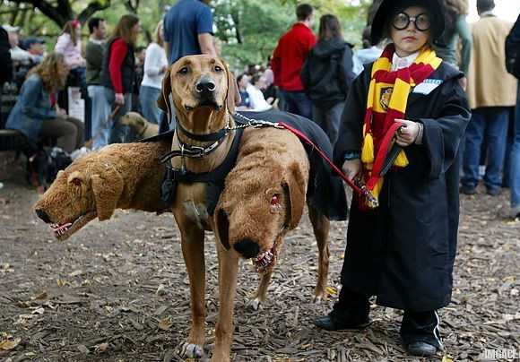 Harry potter dog cerbere three heads